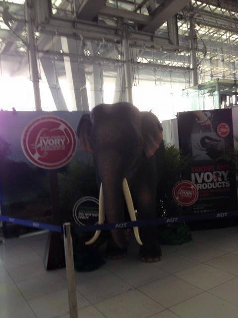 ELEPHANT DAY THAILAND สวัสดี วันช้างไทย SAVE THE ELPHANTS